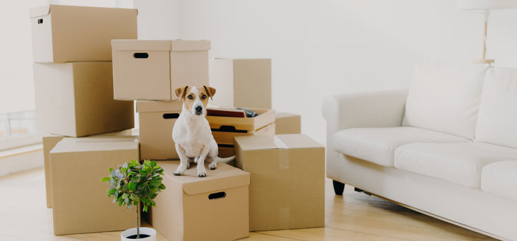 Pet Relocation Services Pet Moving Services Animal Transport